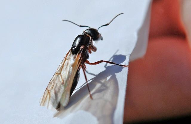 羽アリが発生する理由と時期